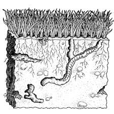 underground-worms