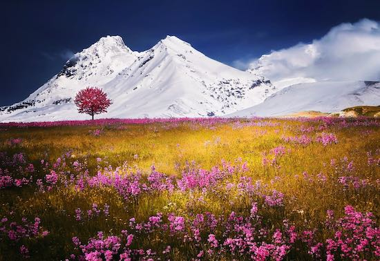field flowers mountains snow
