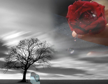 desolate woman rose tree 350